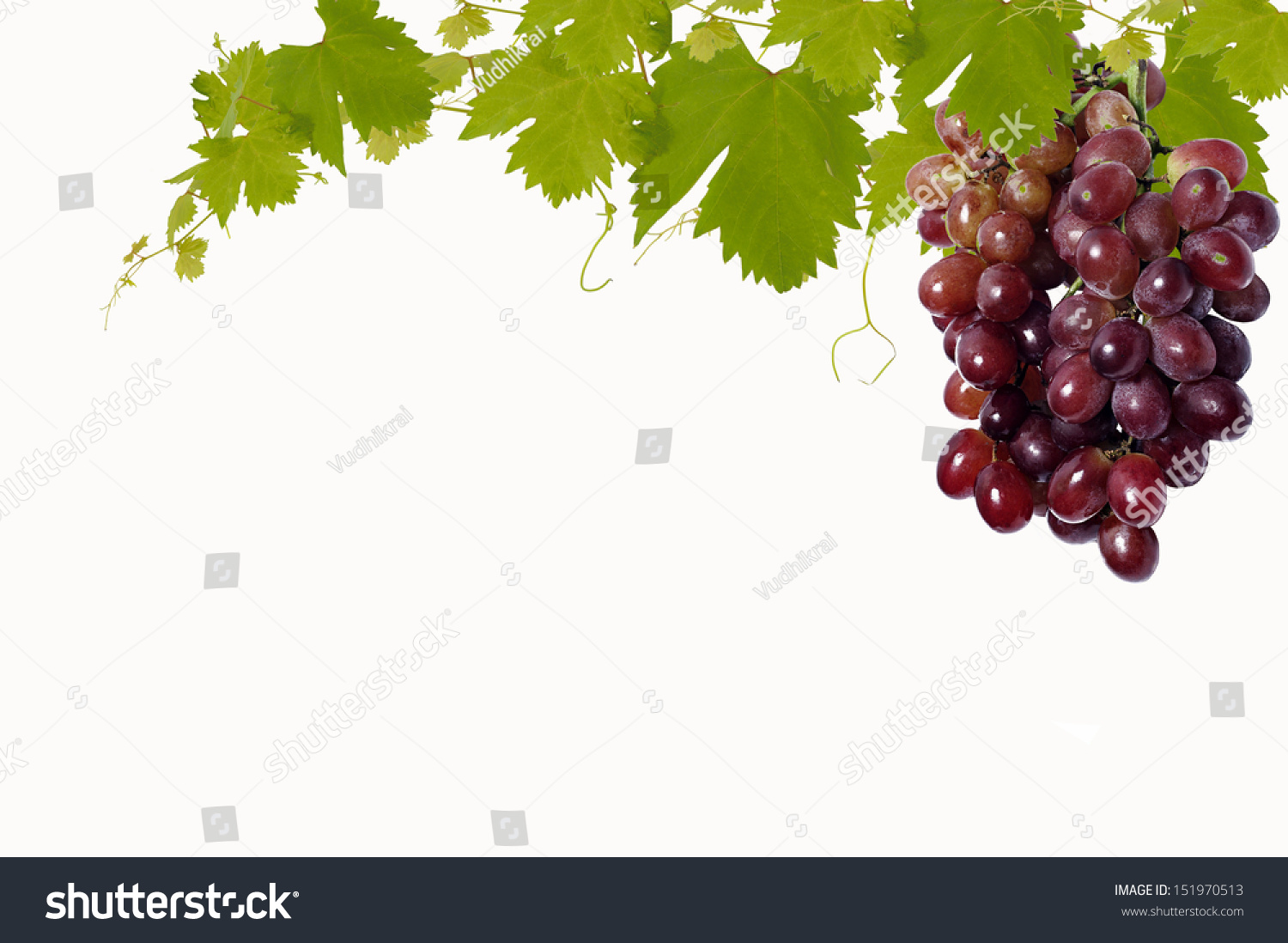 Grape Leaves Background Stock Photo Edit Now 151970513
