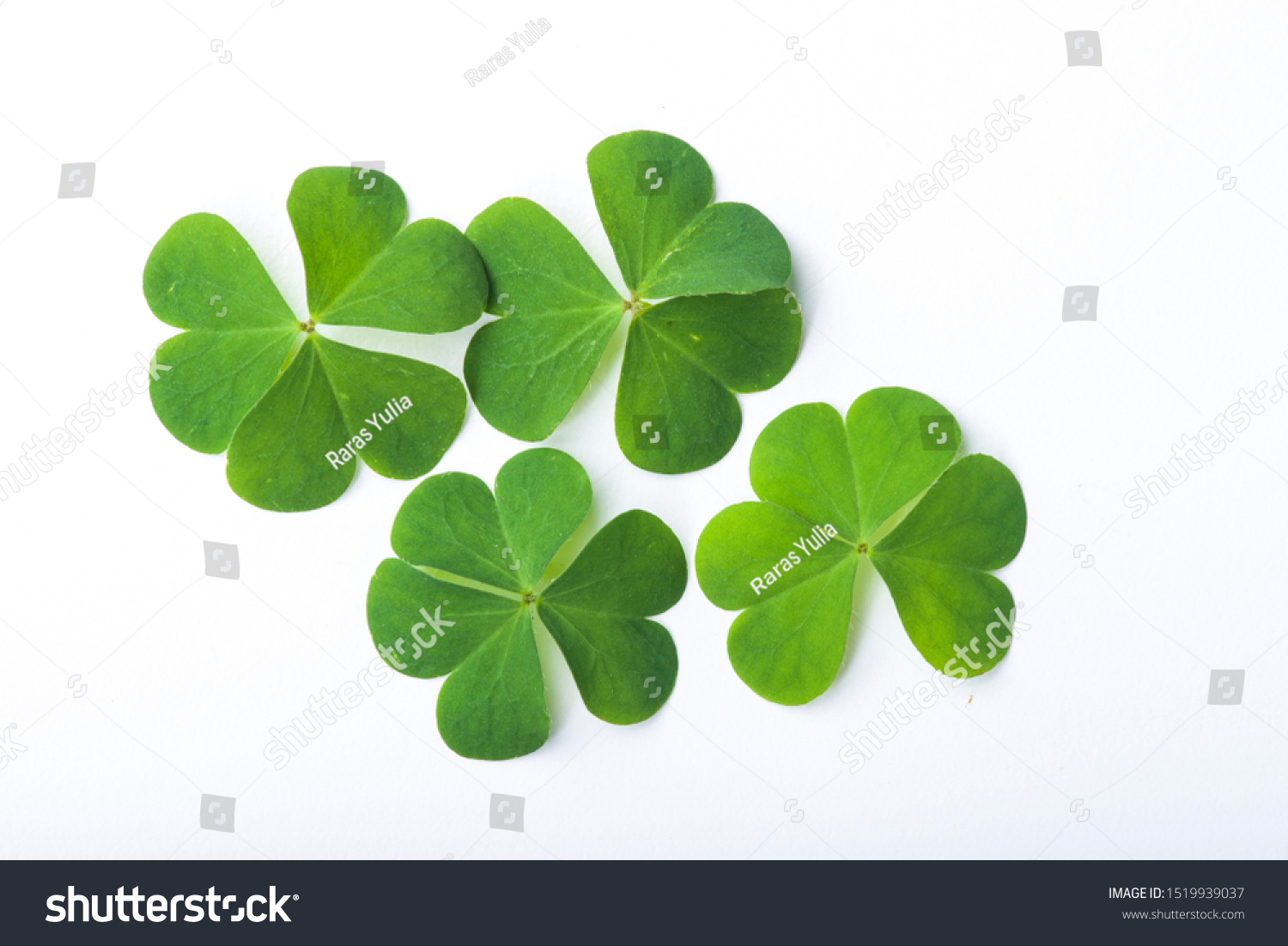 Green clover leaf isolated on white background #1519939037
