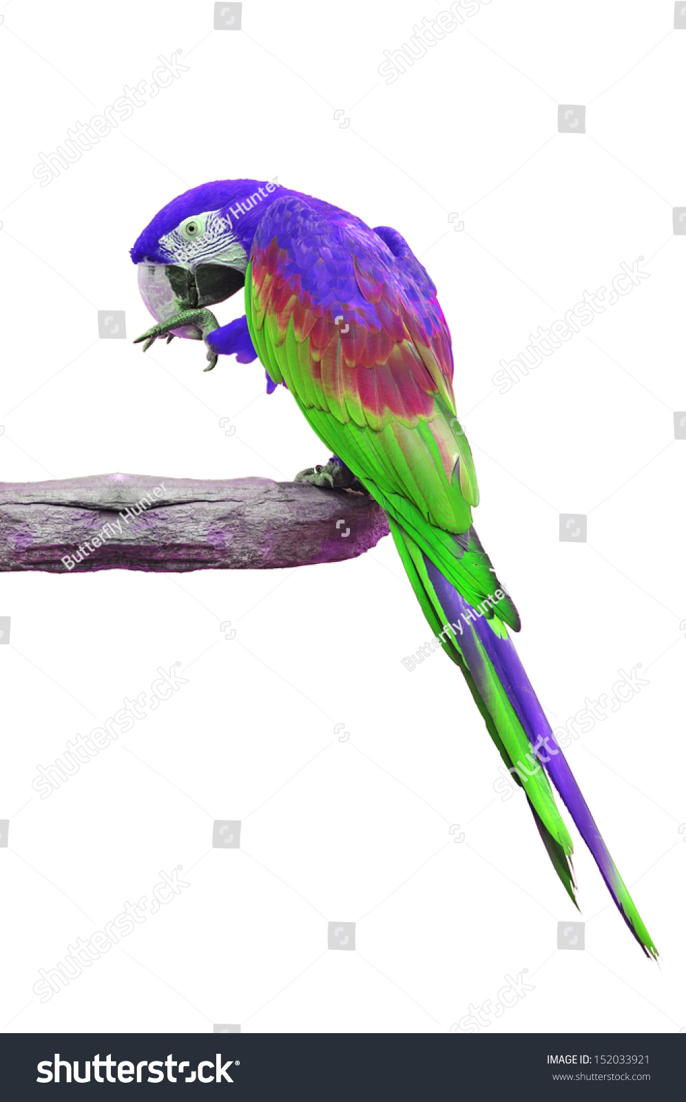 colorful purple and green macaw isolated on white background ez canvas