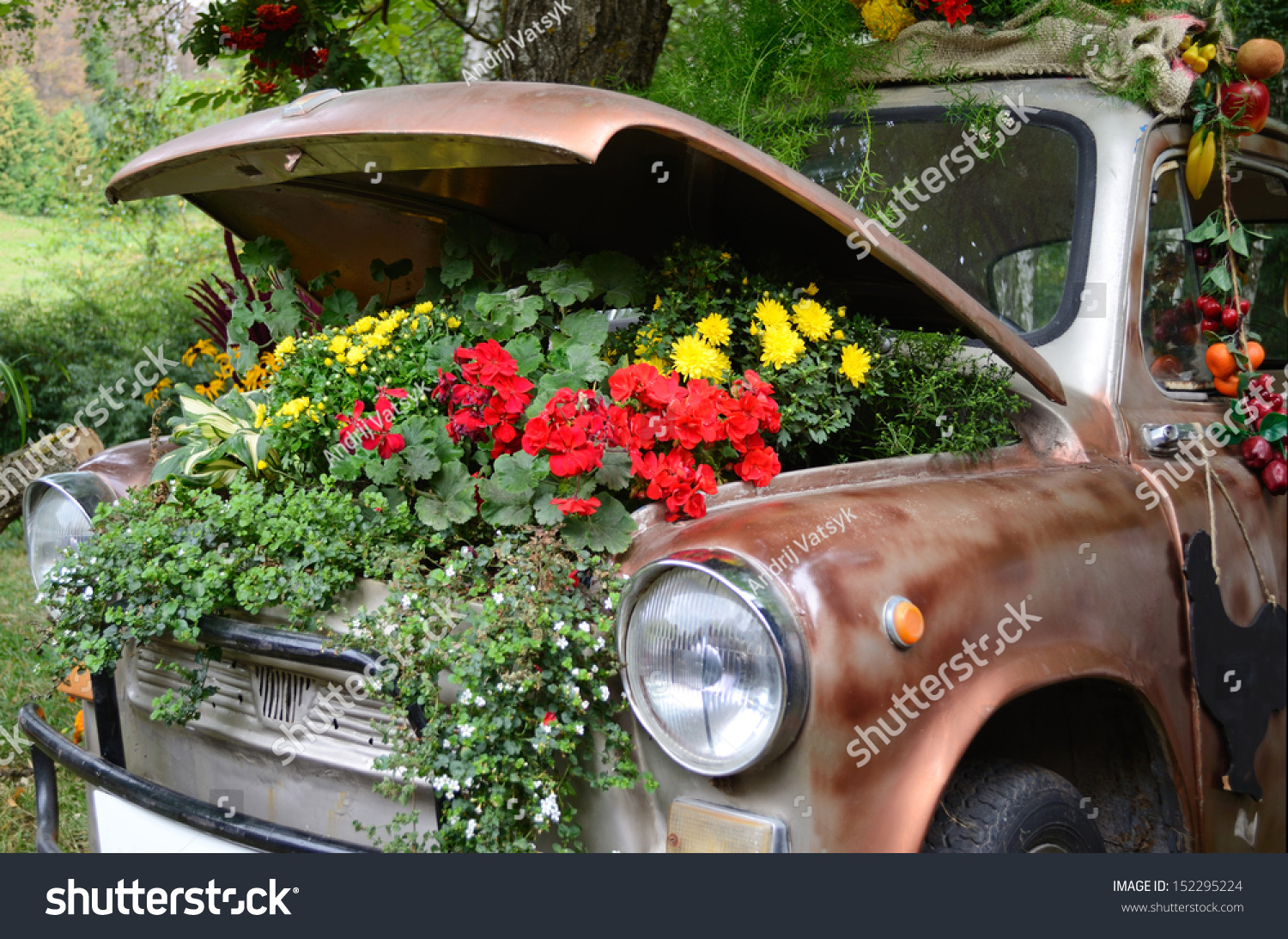 Flowers under hood old car stock photo royalty free 152295224 flowers under the hood of an old car izmirmasajfo Image collections