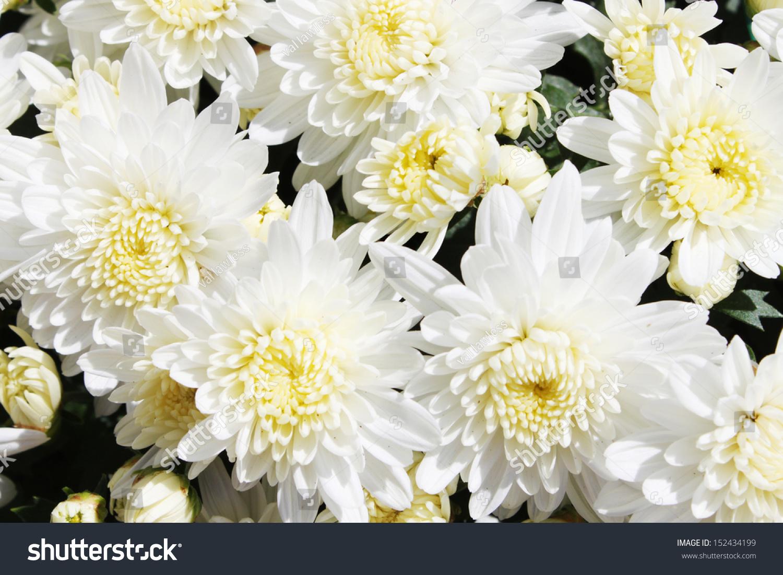 Flowers Ez Canvas