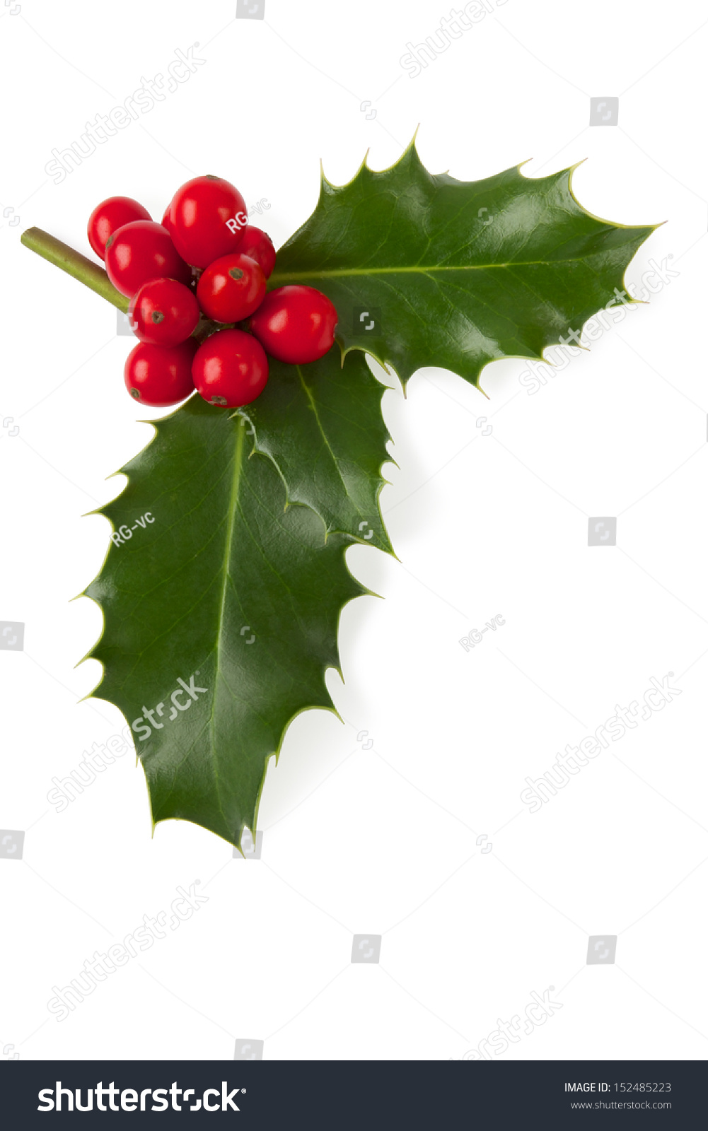 Holly Christmas Decoration Clipping Path Included Stock
