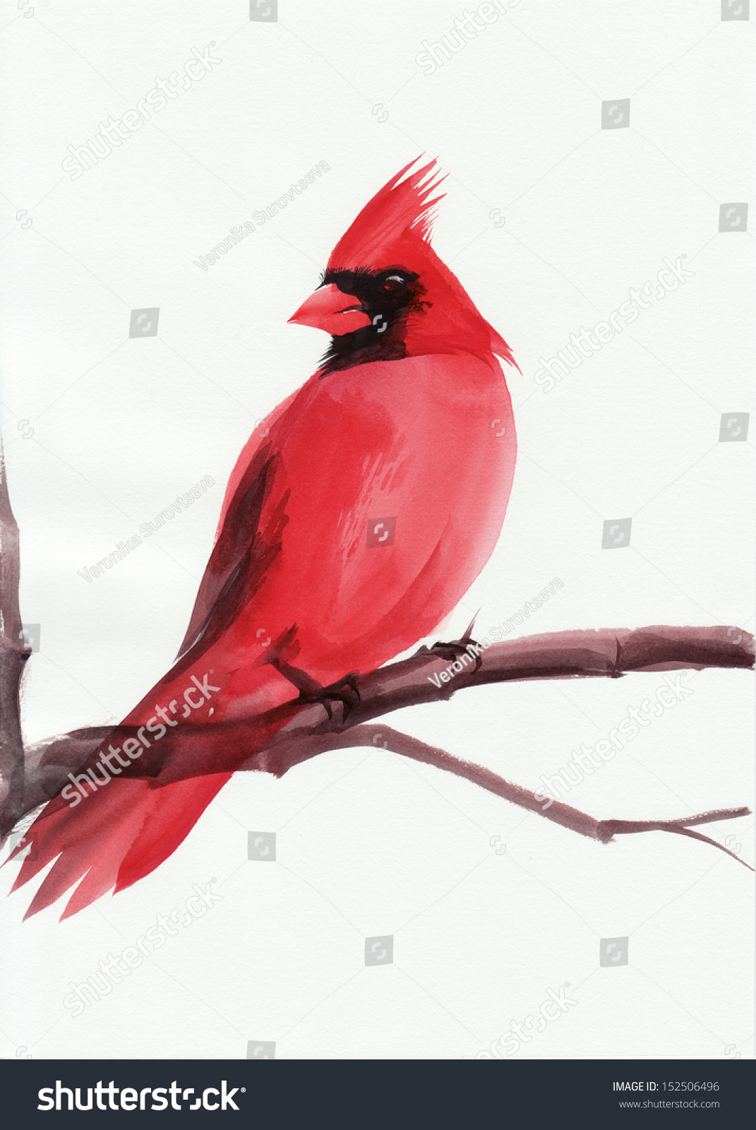 how to draw a cardinal on a branch