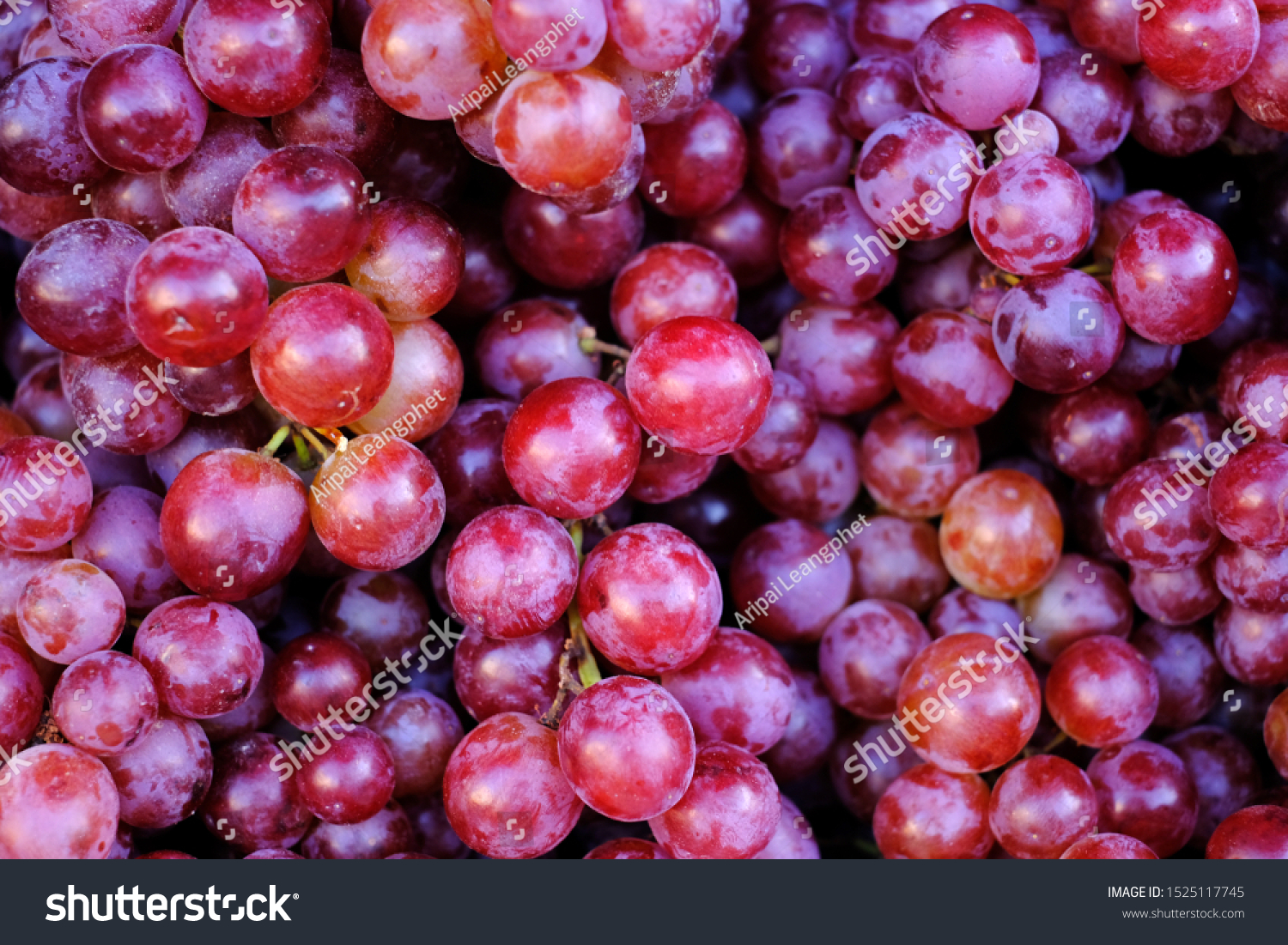 Healthy fruits Red wine grapes background/ dark grapes/ blue grapes/wine grapes,Red wine grapes background/dark grapes,blue grapes,Red Grape in a supermarket local market bunch of grapes ready to eat #1525117745