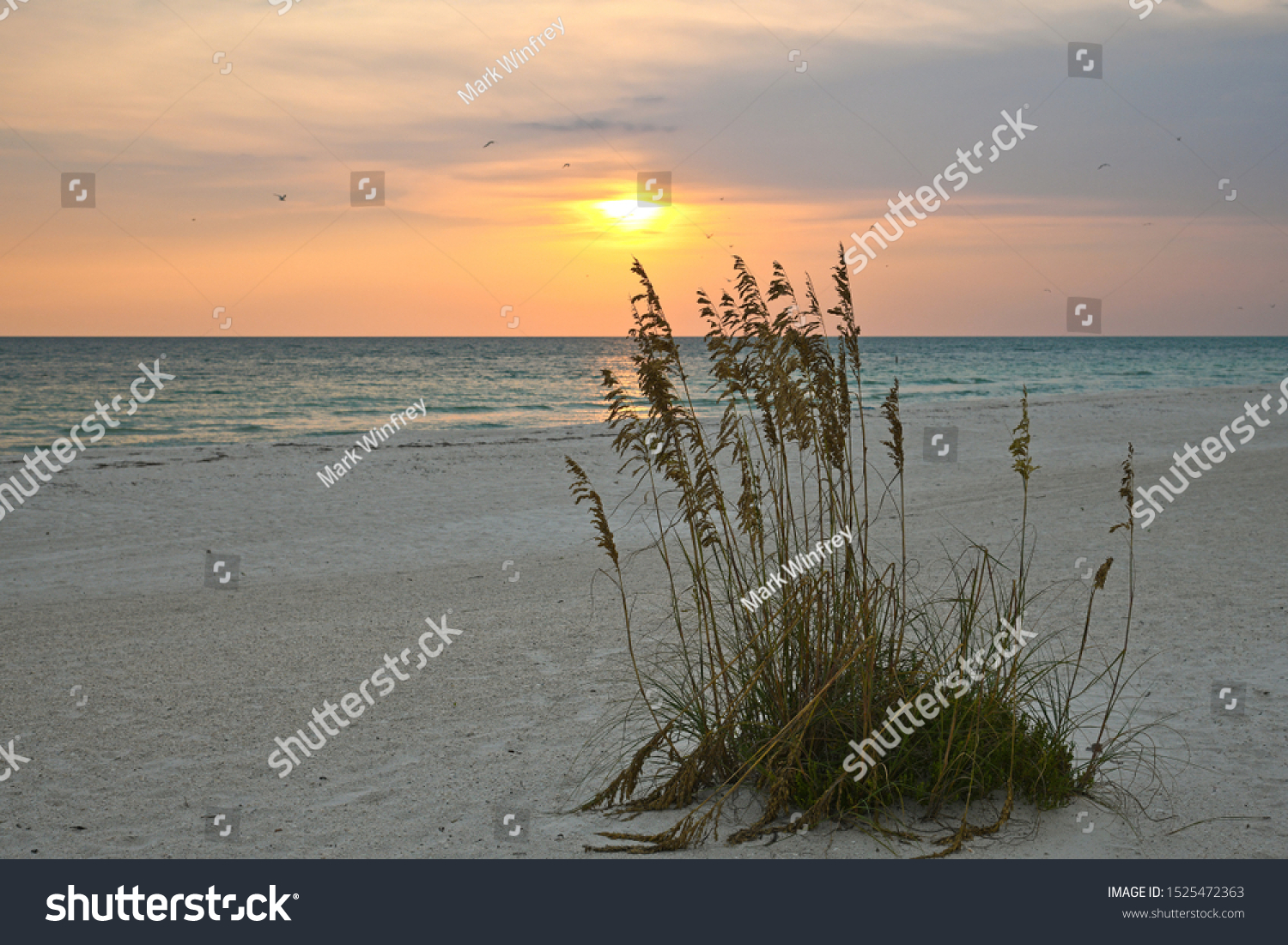 A Beautiful Sunset on the Gulf Coast of Florida