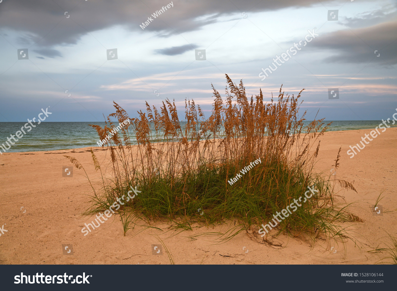 stock-photo-sea-oats-on-beach-of-the-gul