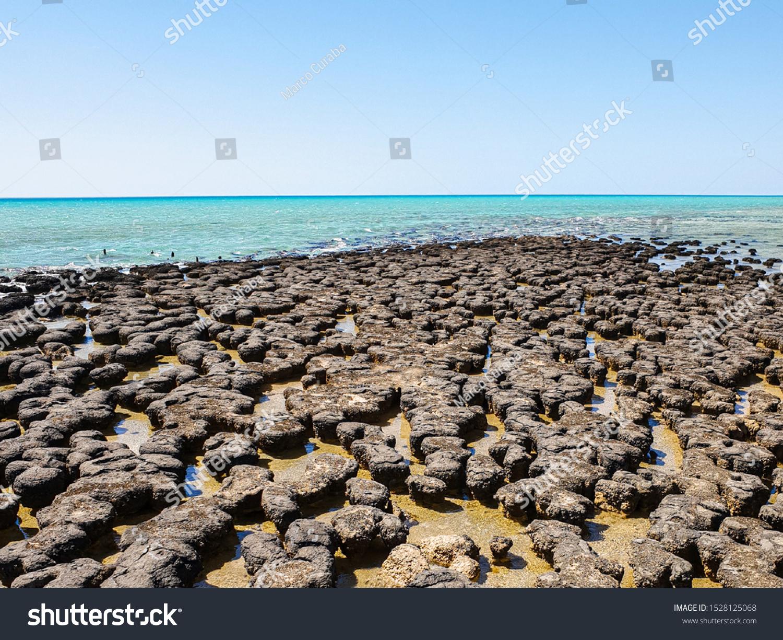stock-photo-hamelin-pool-stromatolites-w