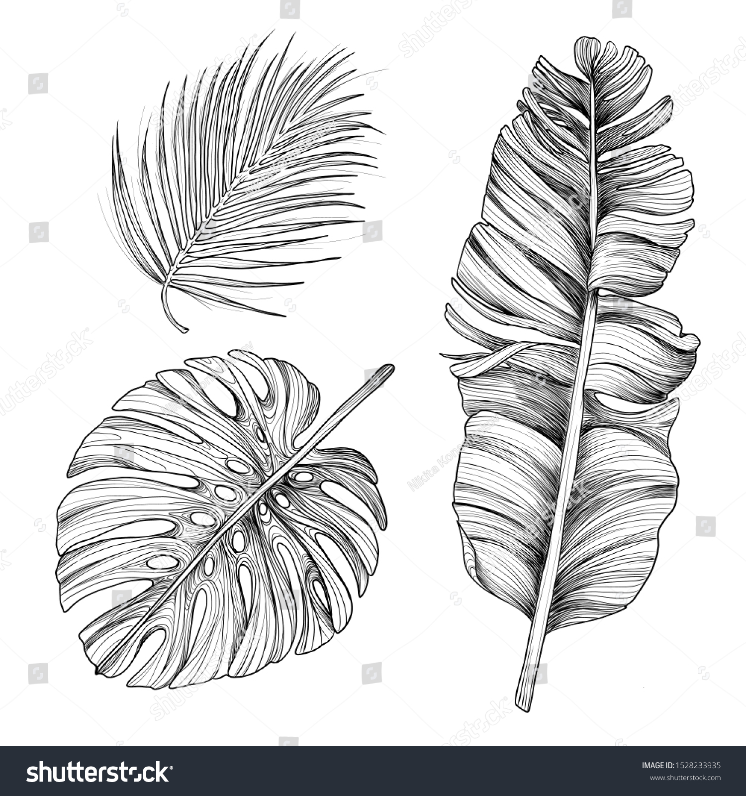 Vector Tropical Palm Leaves Sketch Set Stock Vector Royalty Free 1528233935 Palm beach tree leaves jungle botanical. https www shutterstock com image vector vector tropical palm leaves sketch set 1528233935