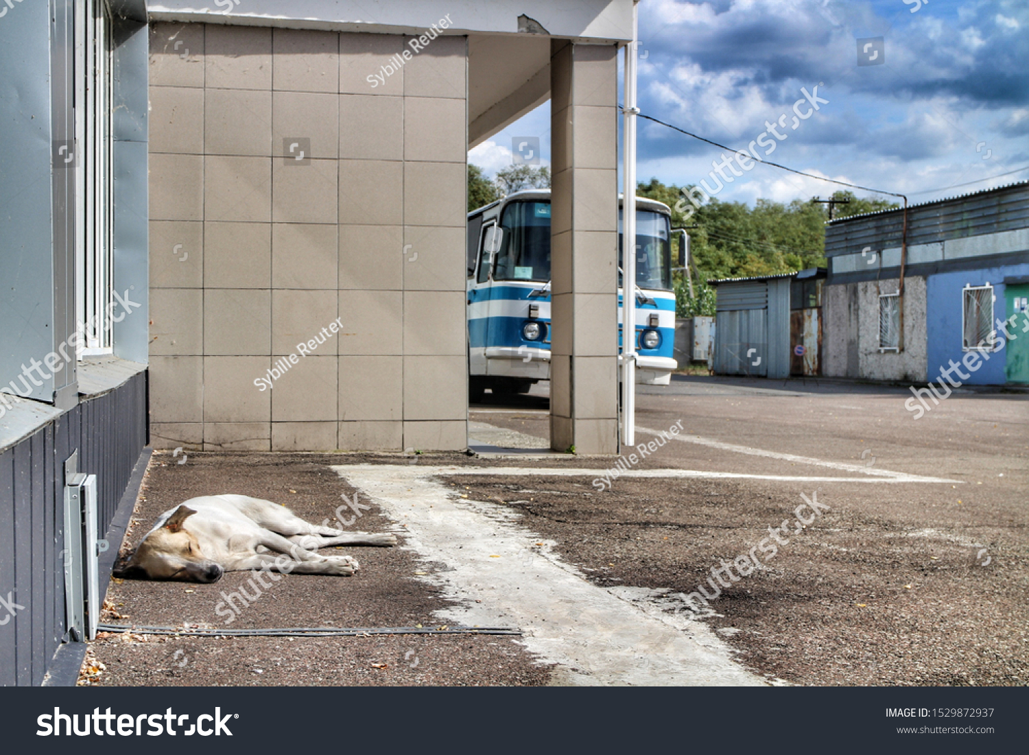 stock-photo-a-stray-dog-rests-in-front-o