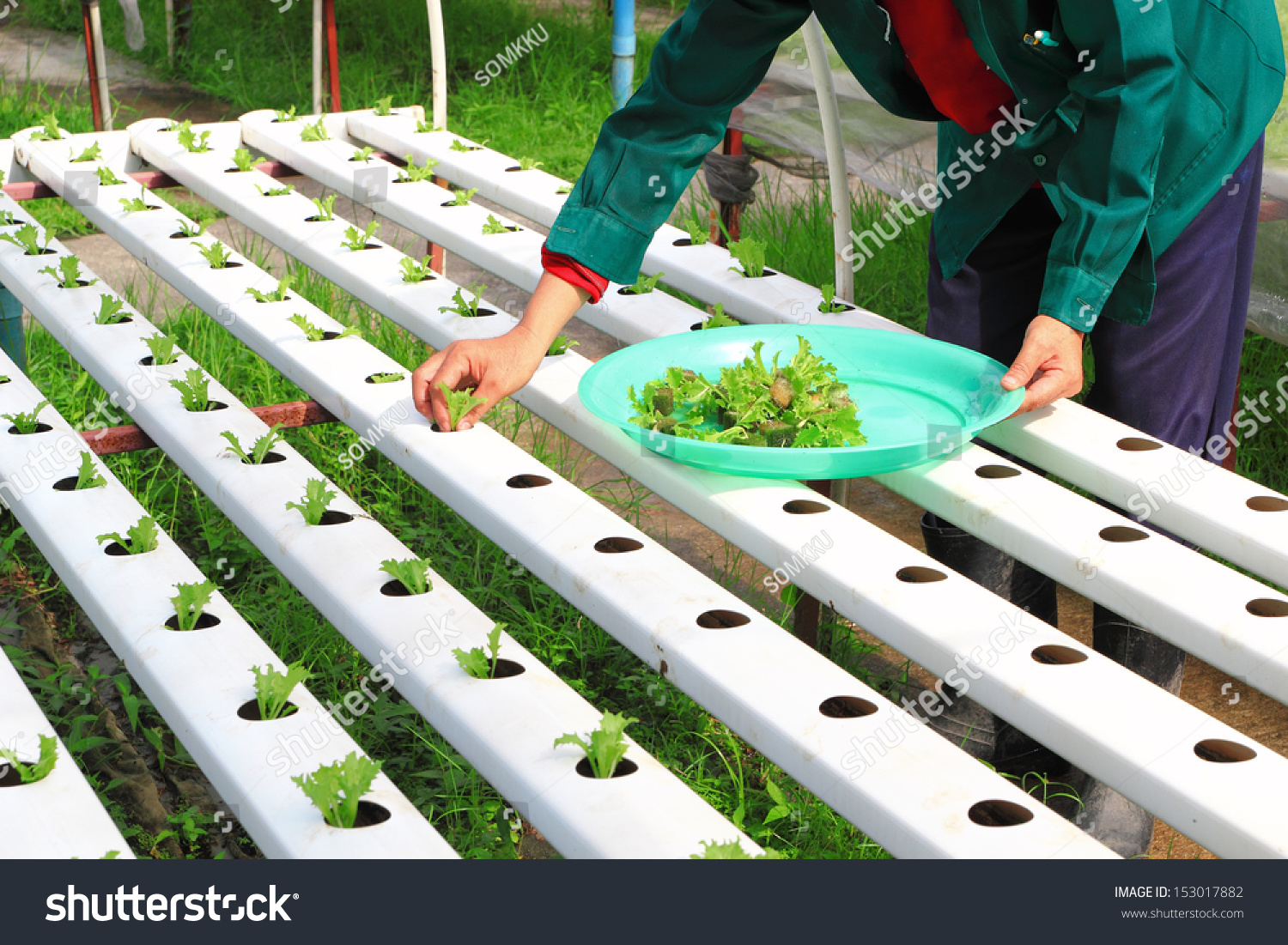 hydroponics method of growing plants using mineral nutrient solutions in water without soil. Black Bedroom Furniture Sets. Home Design Ideas
