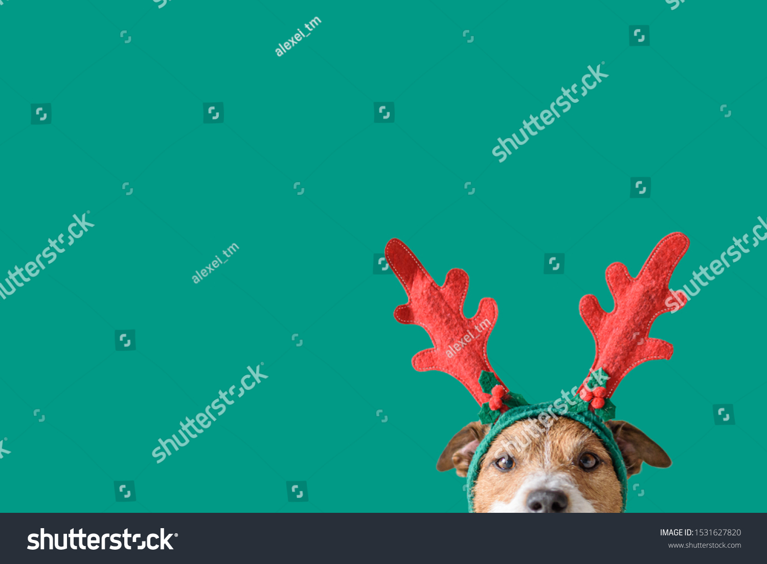 New year and Christmas concept with Dog wearing reindeer antlers headband against solid green background #1531627820
