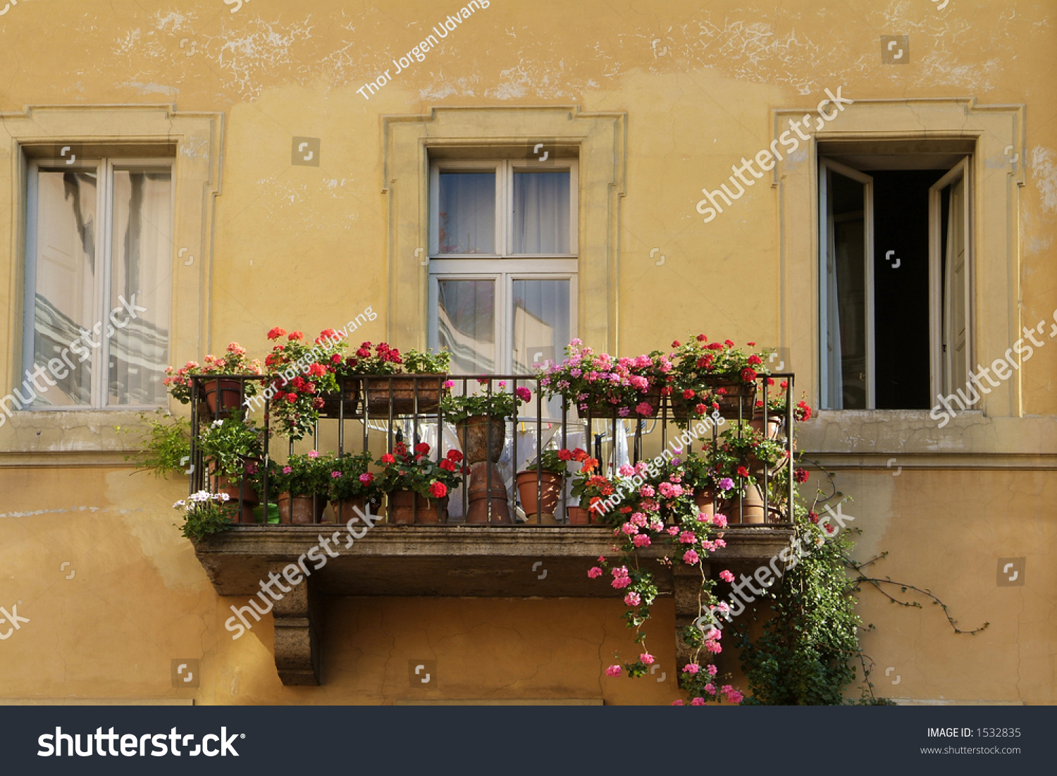 Darmowe window flowers obrazy i pakiety zdjec - freeimages.c.