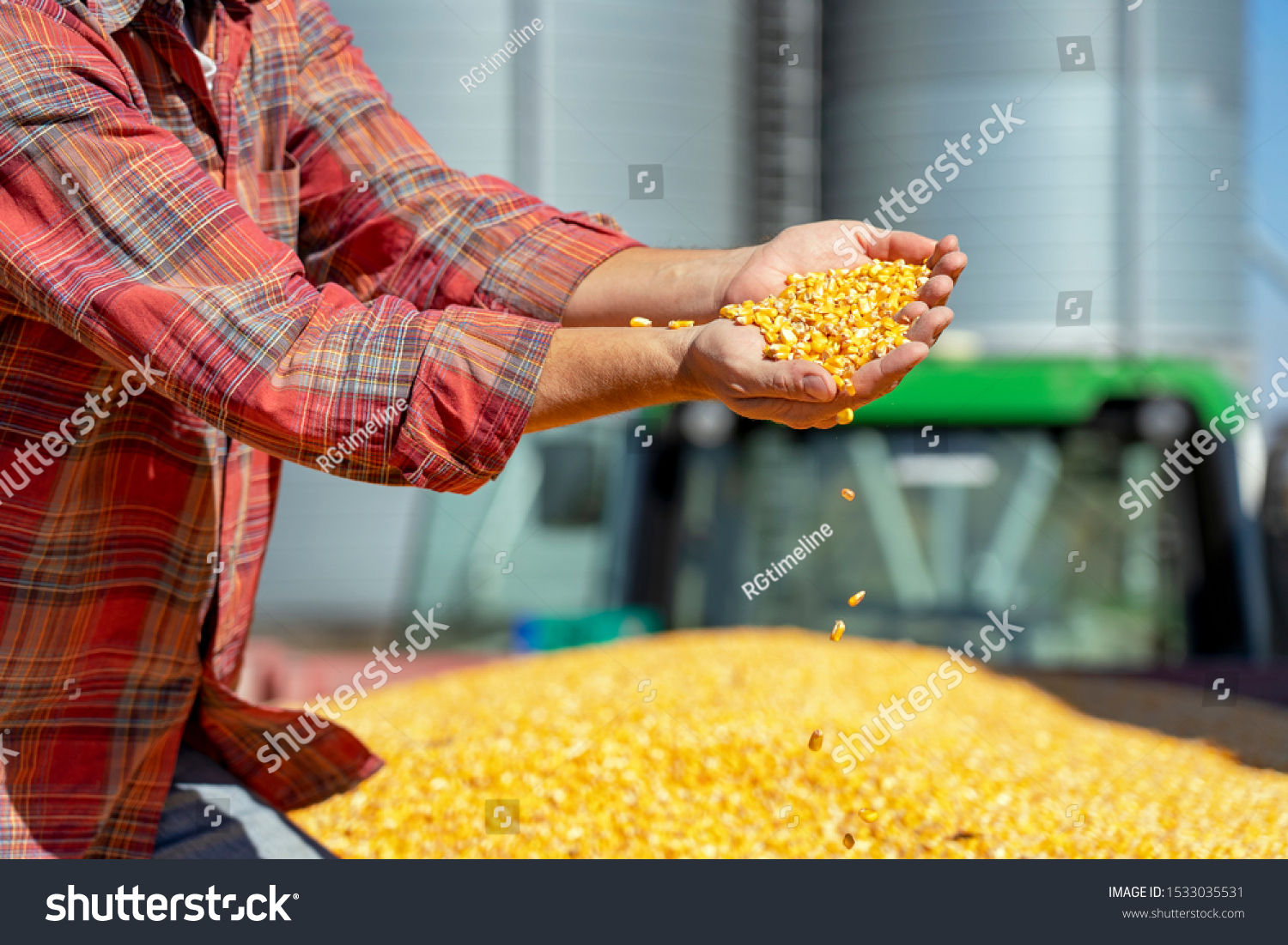 Farmer Showing Freshly Harvested Corn Maize Grains Against Grain Silo. Farmer's Hands Holding Harvested Grain Corn. Farmer with Corn Kernels in His Hands Sitting in Trailer Full of Corn Seeds. #1533035531