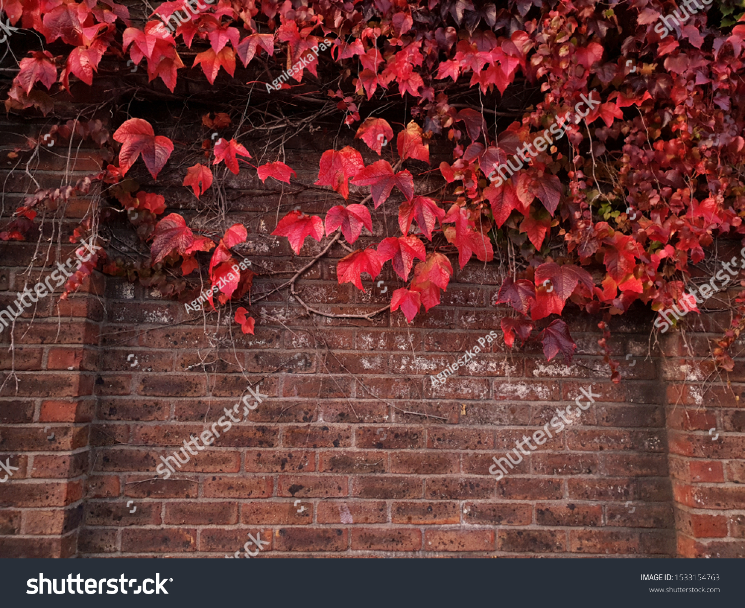 stock-photo-autumn-background-with-red-l