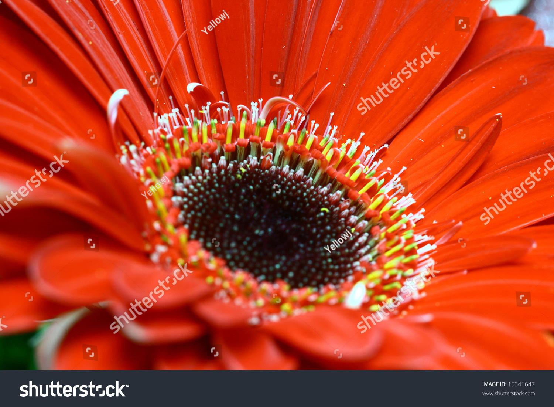 Very beautiful flowers stock photo 100 legal protection 15341647 very beautiful flowers izmirmasajfo