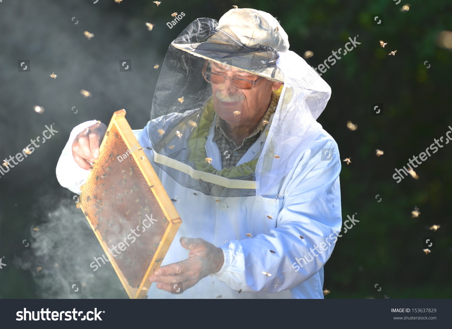 how to start an apiary