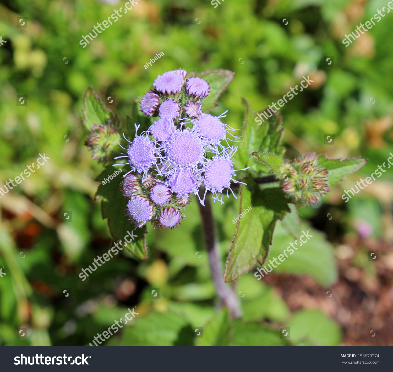 Tiny Purple Flowers Ez Canvas