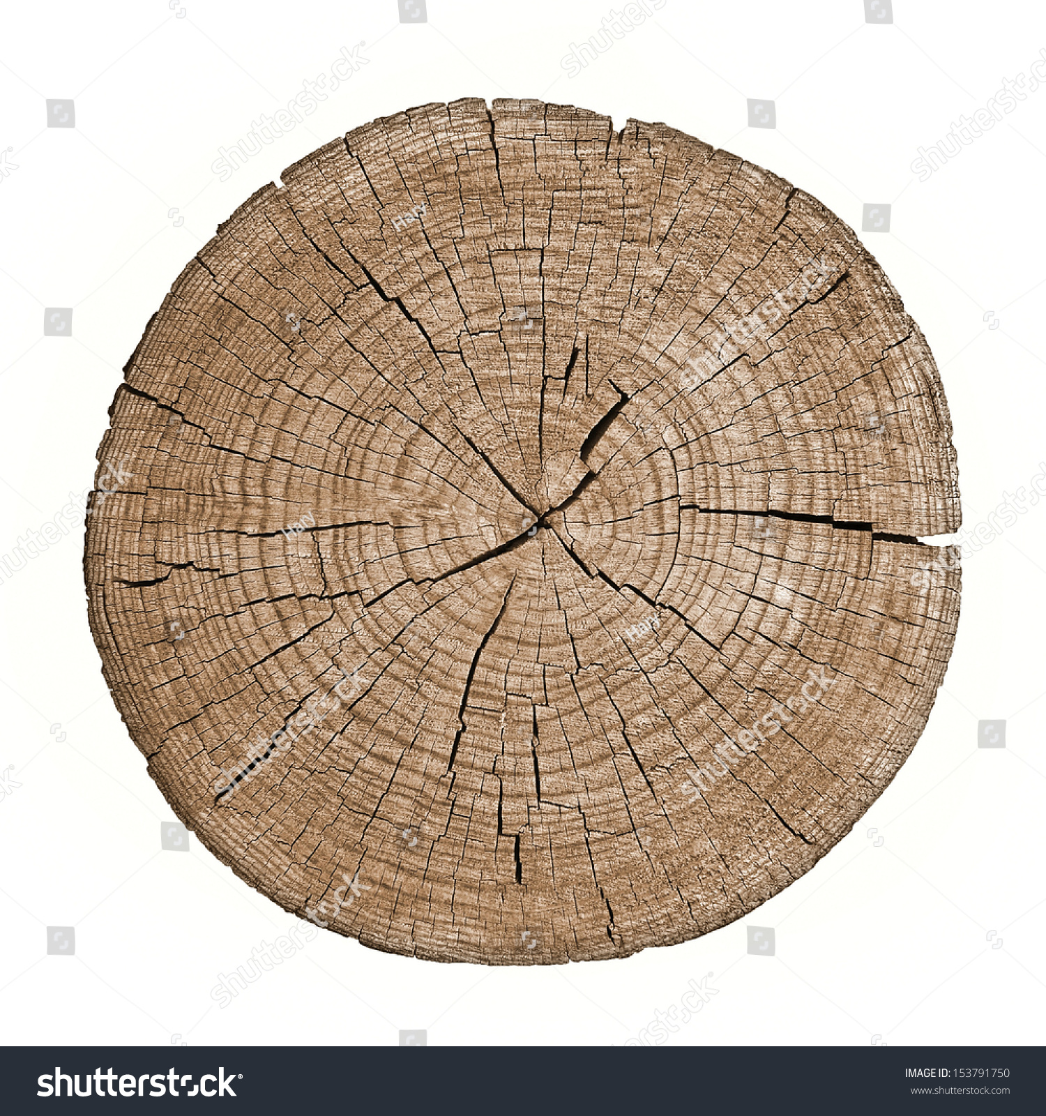 cross section tree trunk showing growth stock photo 153791750 shutterstock. Black Bedroom Furniture Sets. Home Design Ideas