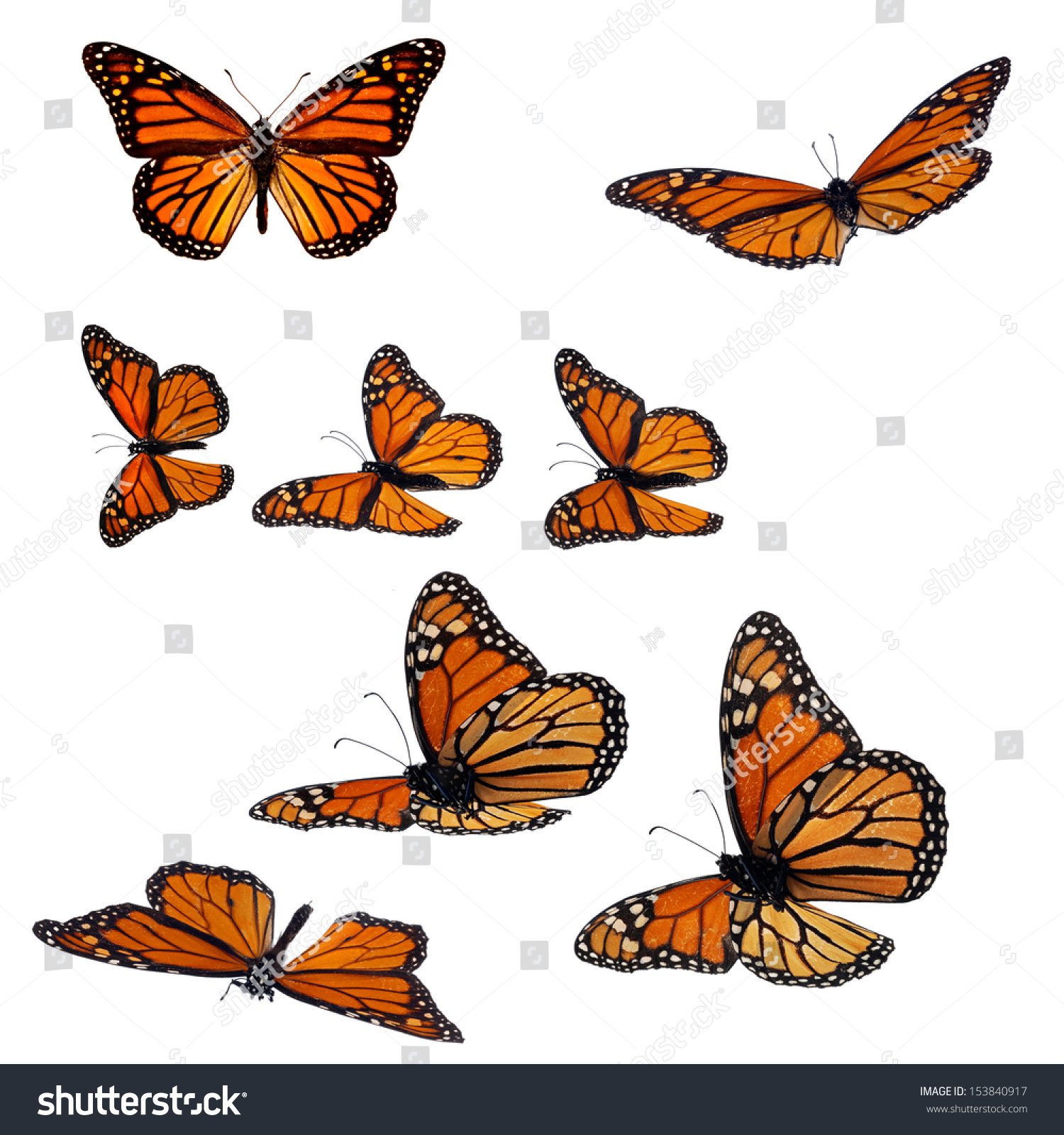 Collection monarch butterflies stock photo 153840917 shutterstock collection of monarch butterflies biocorpaavc Gallery