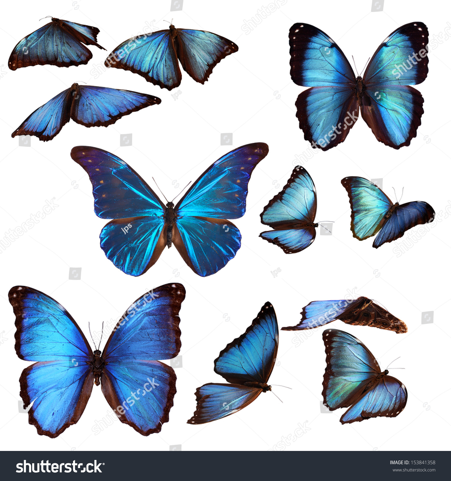 how to start a butterfly collection