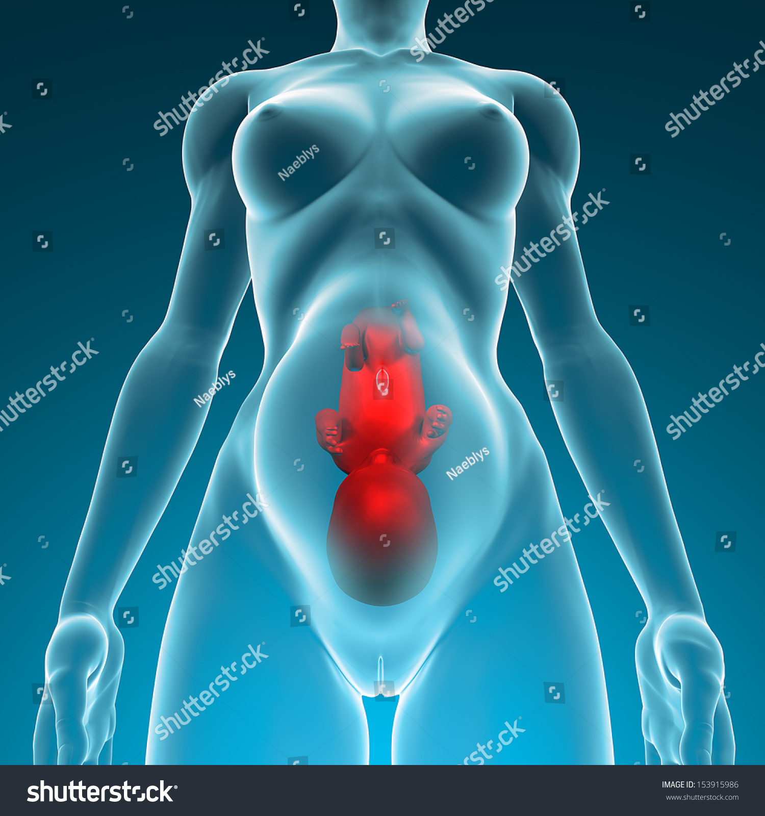 Pregnant Womans Womb Fetus Pregnancy Childbirth Stock Illustration
