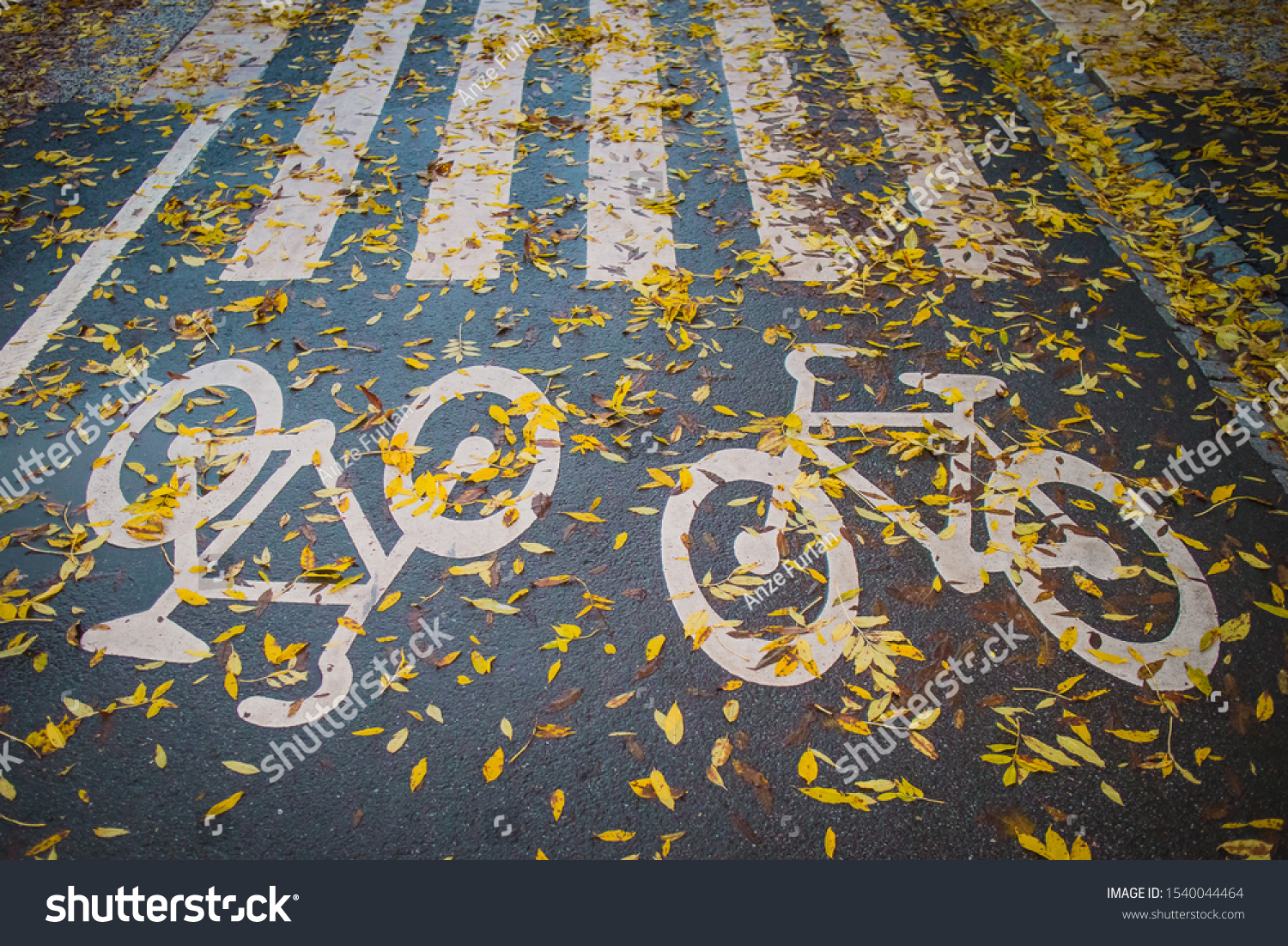 Bicycle path, double lane in Stockholm, with painted bicycle pictograms. Bicycle path covered with yellow leaves, dangerous slippery surface. #1540044464