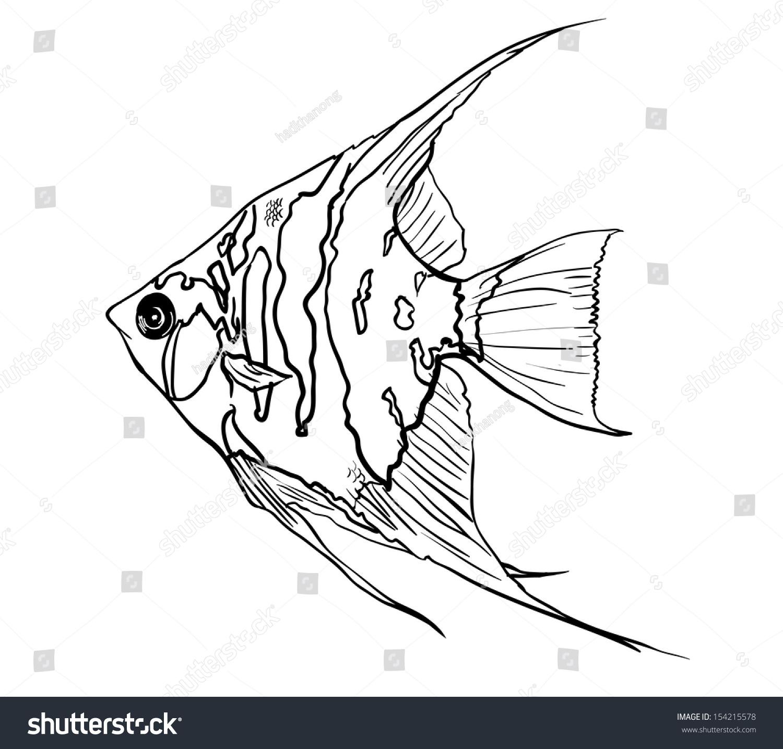Angel FishPterophyllum Species Originate From The Amazon River