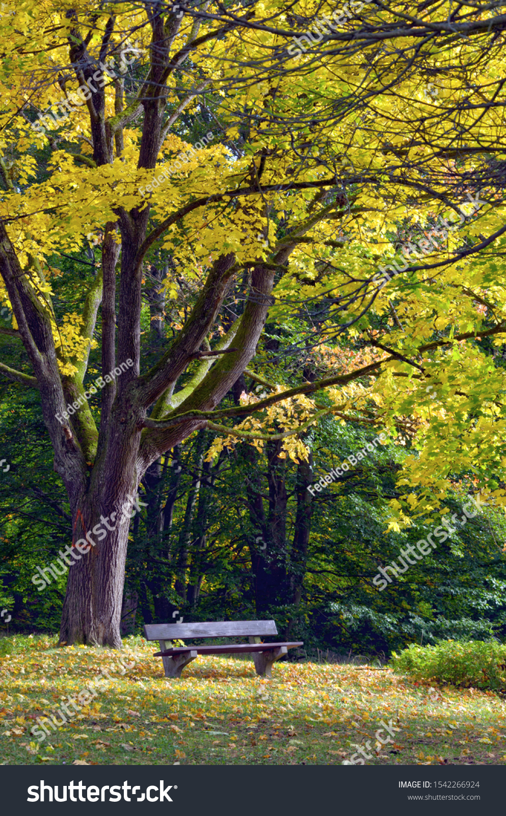 stock-photo-autumn-in-park-bench-with-ye