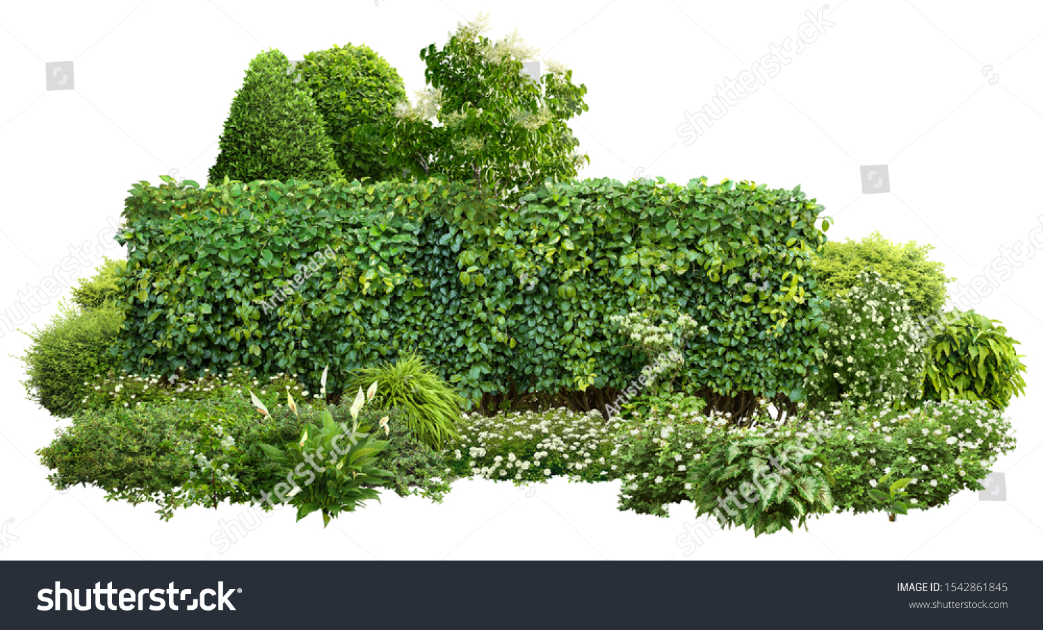 Cutout green hedge with flower bed. Garden design isolated on white background. Flowering shrub and green plants for landscaping. Decorative shrub and boxwood hedge. High quality clipping mask. #1542861845