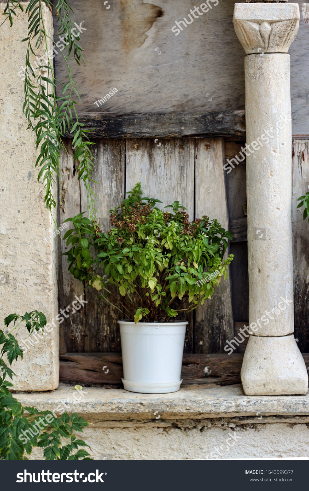 Greece '- Folegandros island. Herbs growing on a window cill at traditional taverna. The window - alcove is part of an old church. Picture may illustrate natural ingredients and a picturesque setting. #1543599377