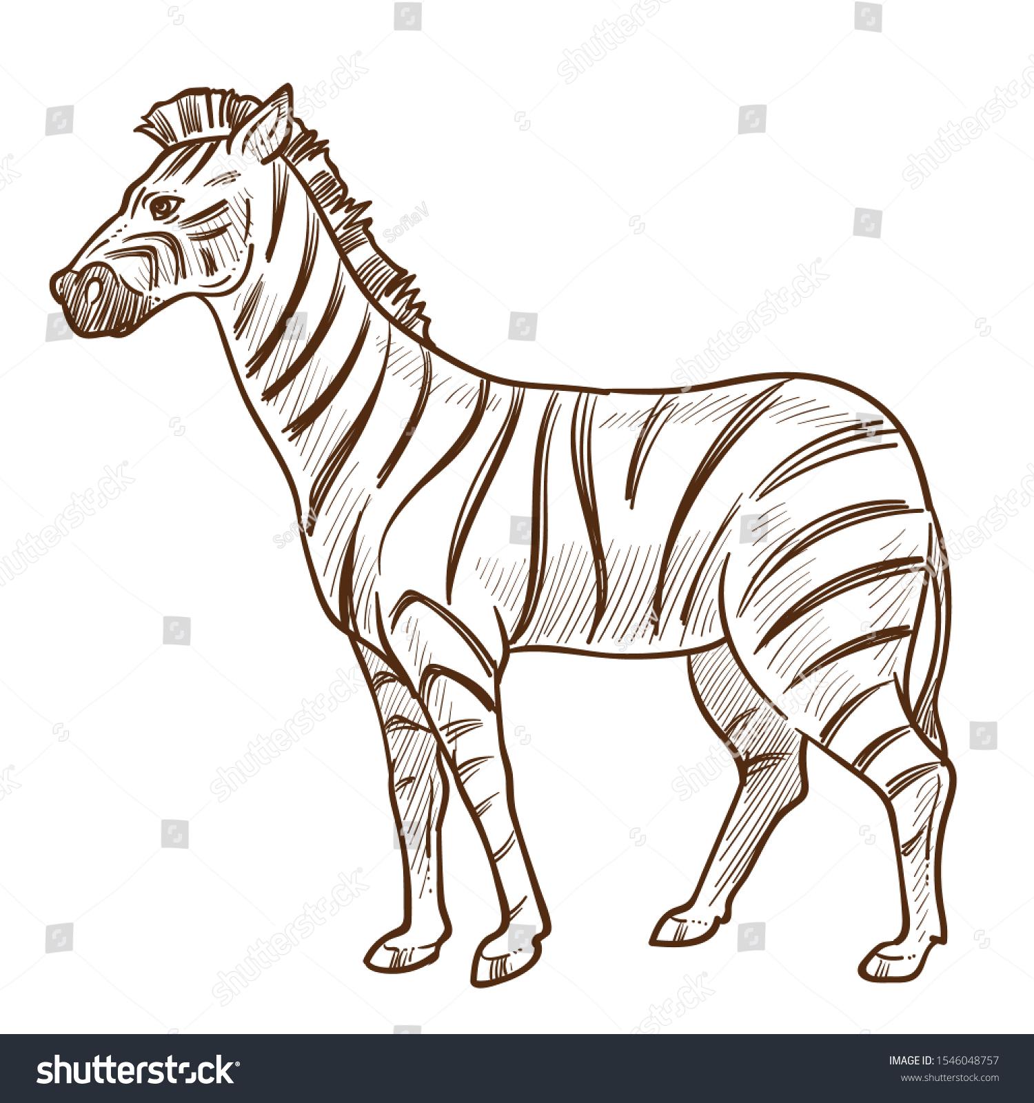 Zebra Isolated Sketch African Savannah Wild Stock Vector (Royalty Free)  1546048757