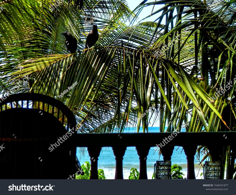 stock-photo-two-black-birds-on-palm-tree
