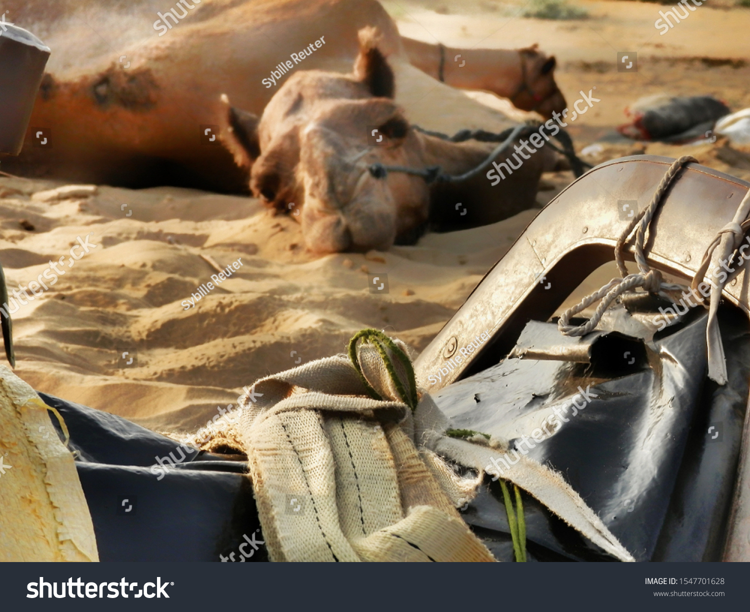 stock-photo-a-camel-s-saddle-in-the-fore
