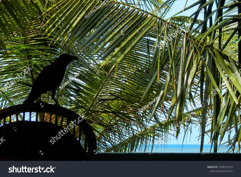 stock-photo-silhouette-of-a-black-bird-o