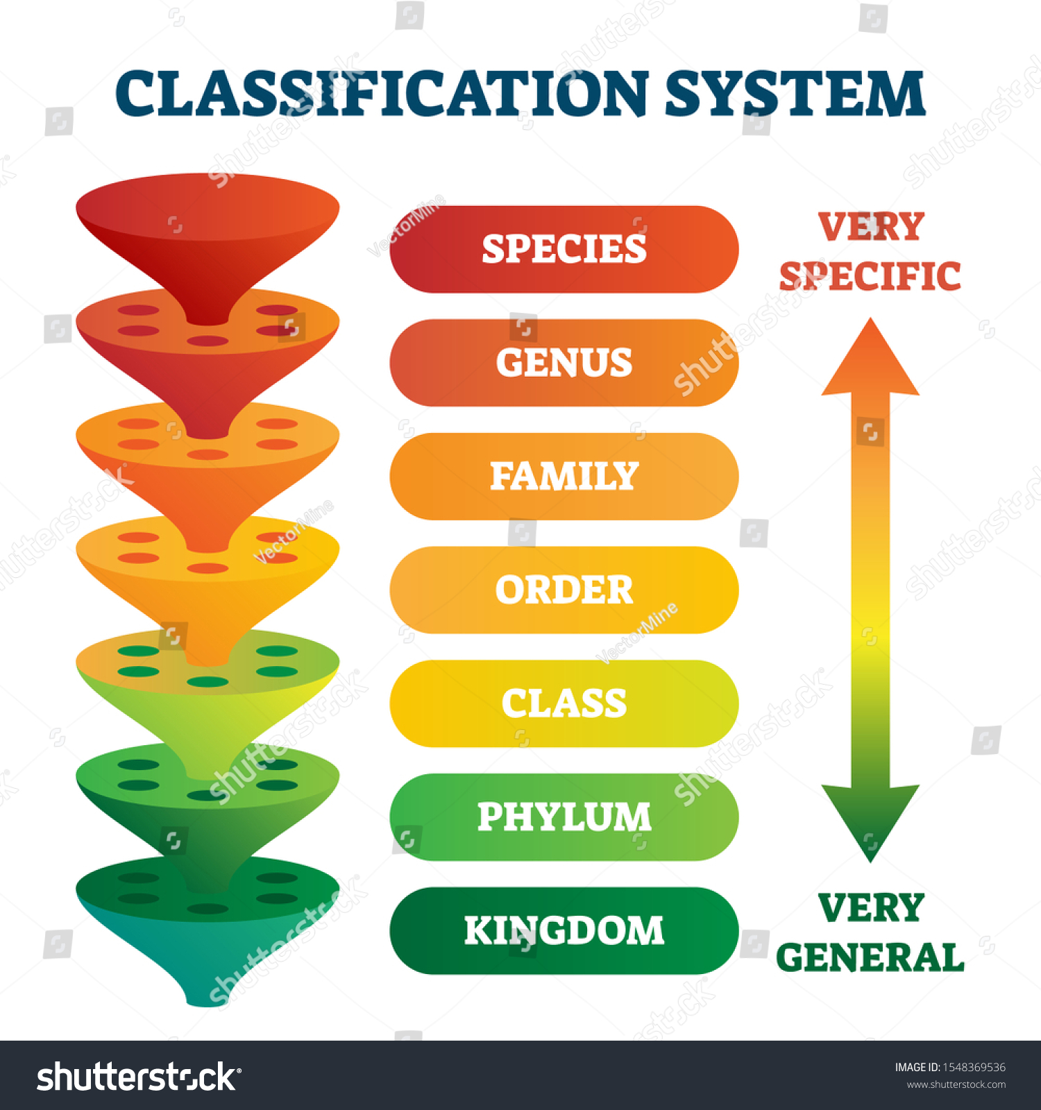 Classification System Vector Illustration Labeled Taxonomic Stock