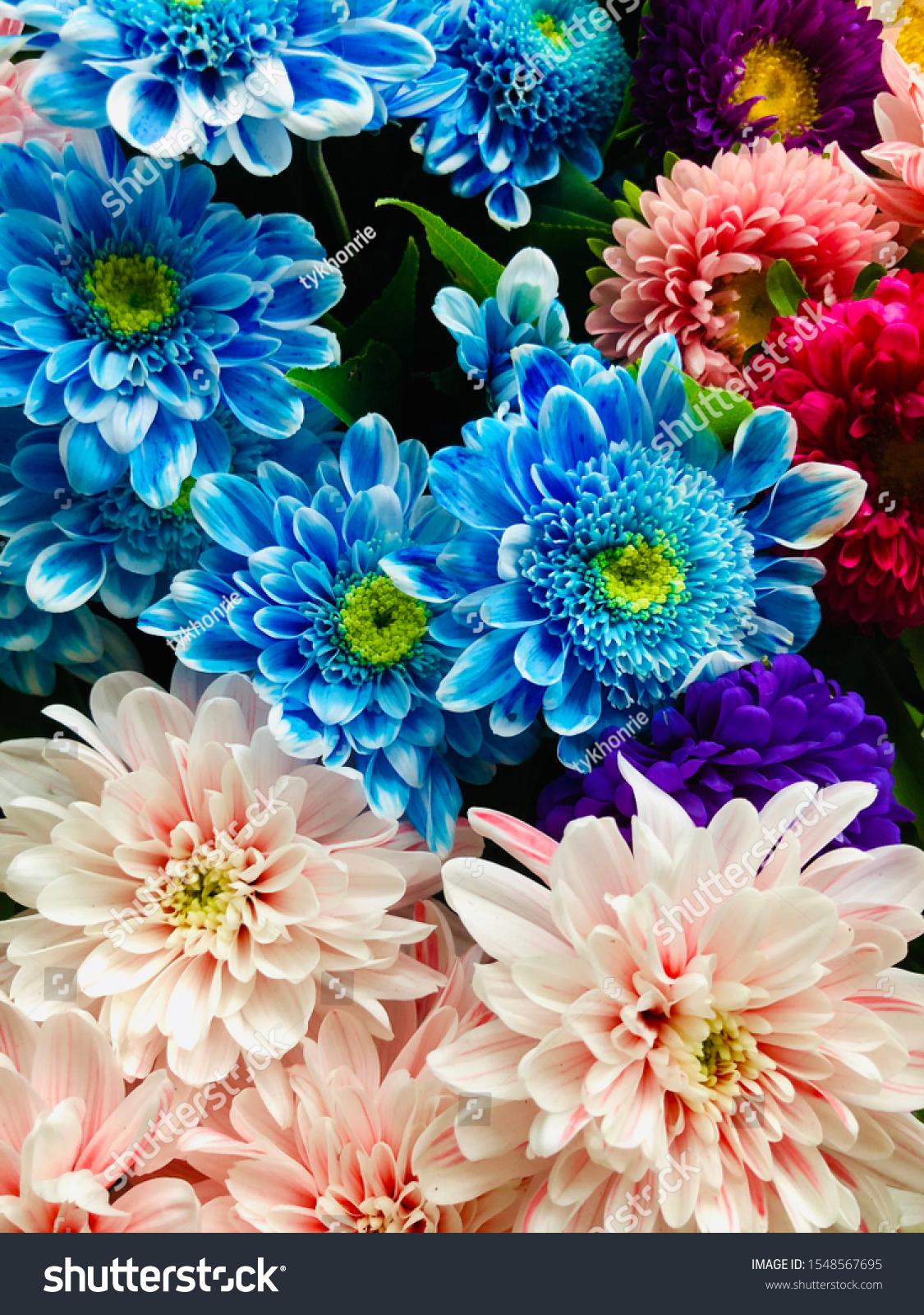 stock-photo-chrysanthemum-and-aster-blue