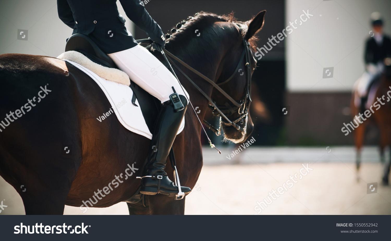 Dark Bay Horse Equestrian Gear Rider Stock Photo Edit Now 1550552942
