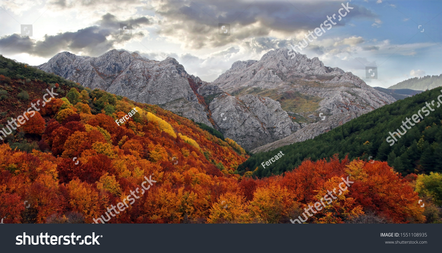 Stunning autumn landscape in a cloudy day. A colorful red and yellow beech forest contrasts with a green pine tree forest. In the background there's a tall limestone mountain. León, Spain.