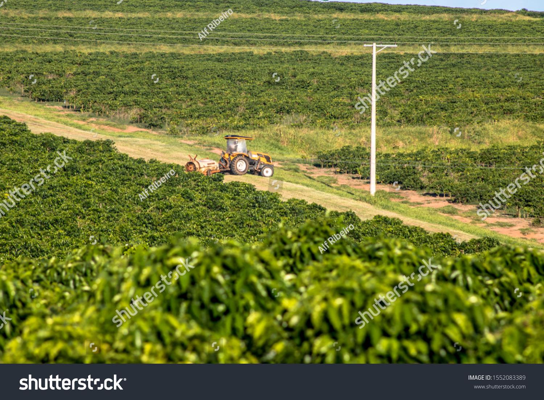 Fernão São Paulo fonte: image.shutterstock.com