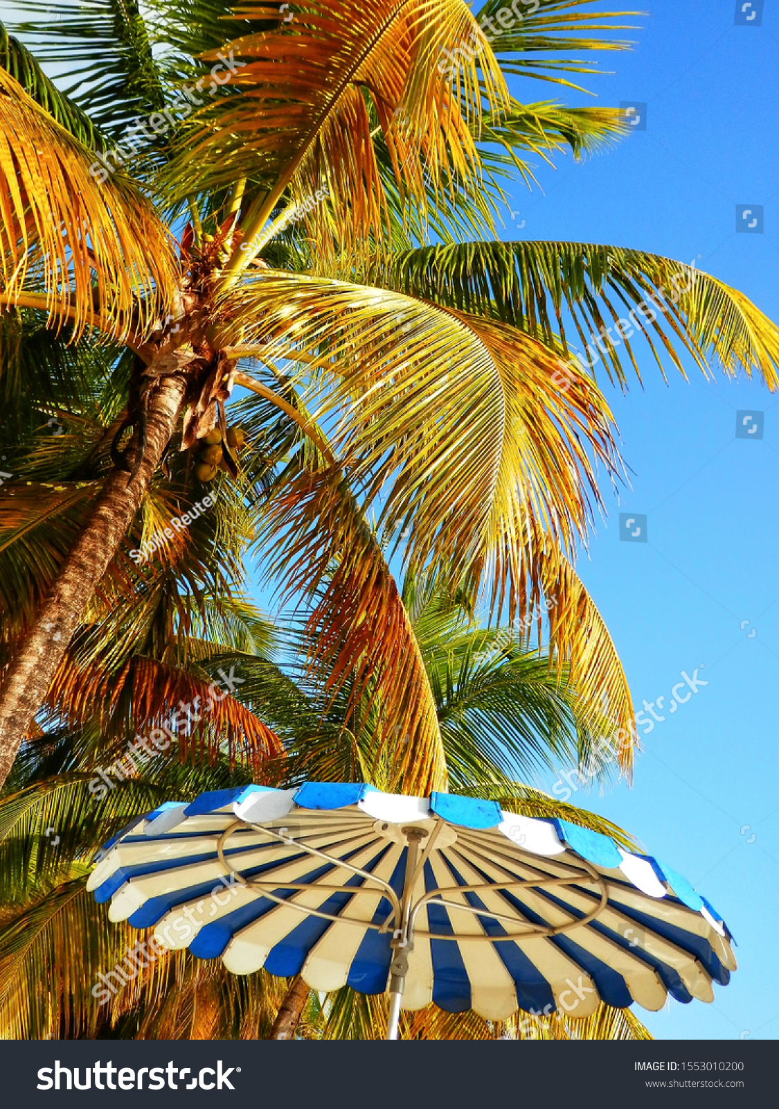 stock-photo-palm-trees-and-a-typical-par