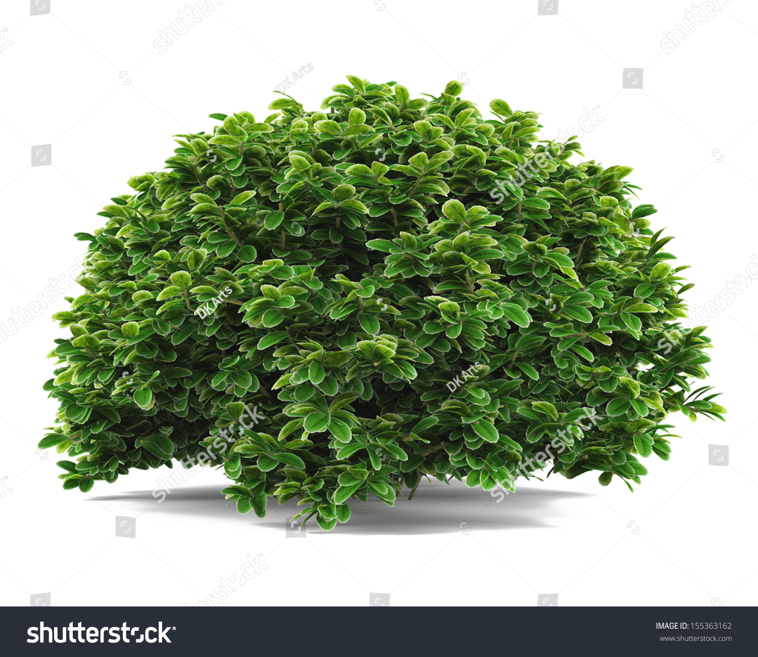 Parsley Illustration Plant Bush Isolated St...