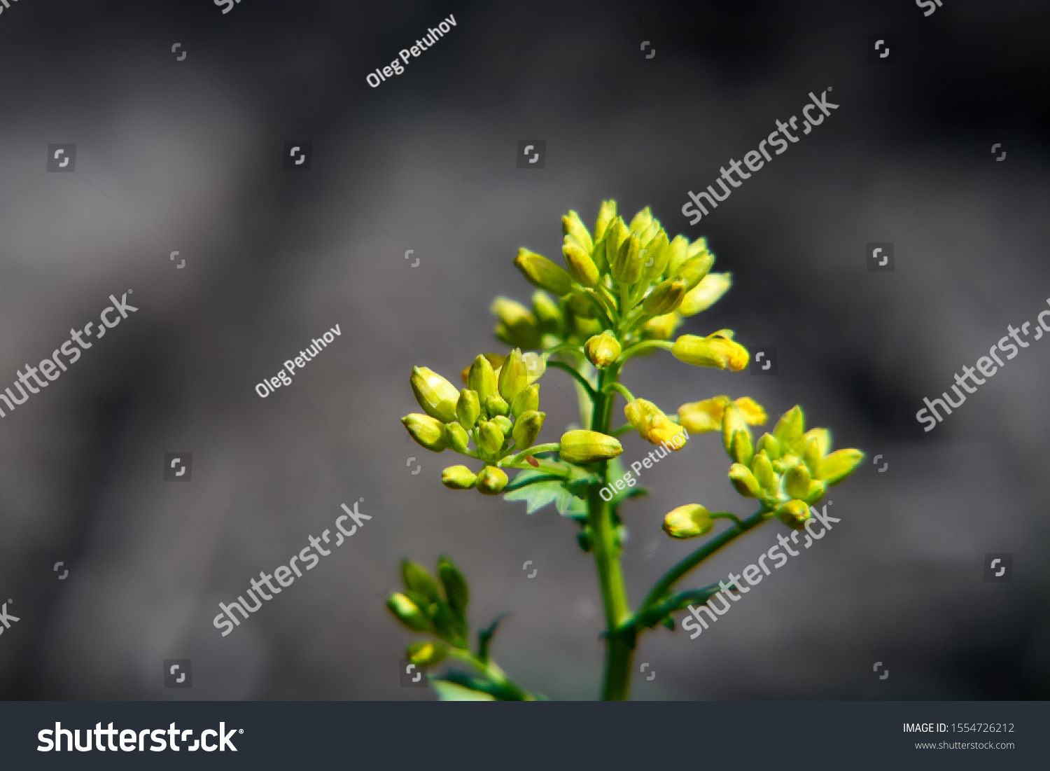 Yellow flower with smooth background       #1554726212