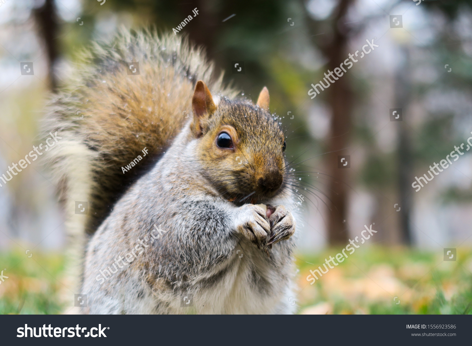 stock-photo-cute-squirrel-at-fall-in-mon