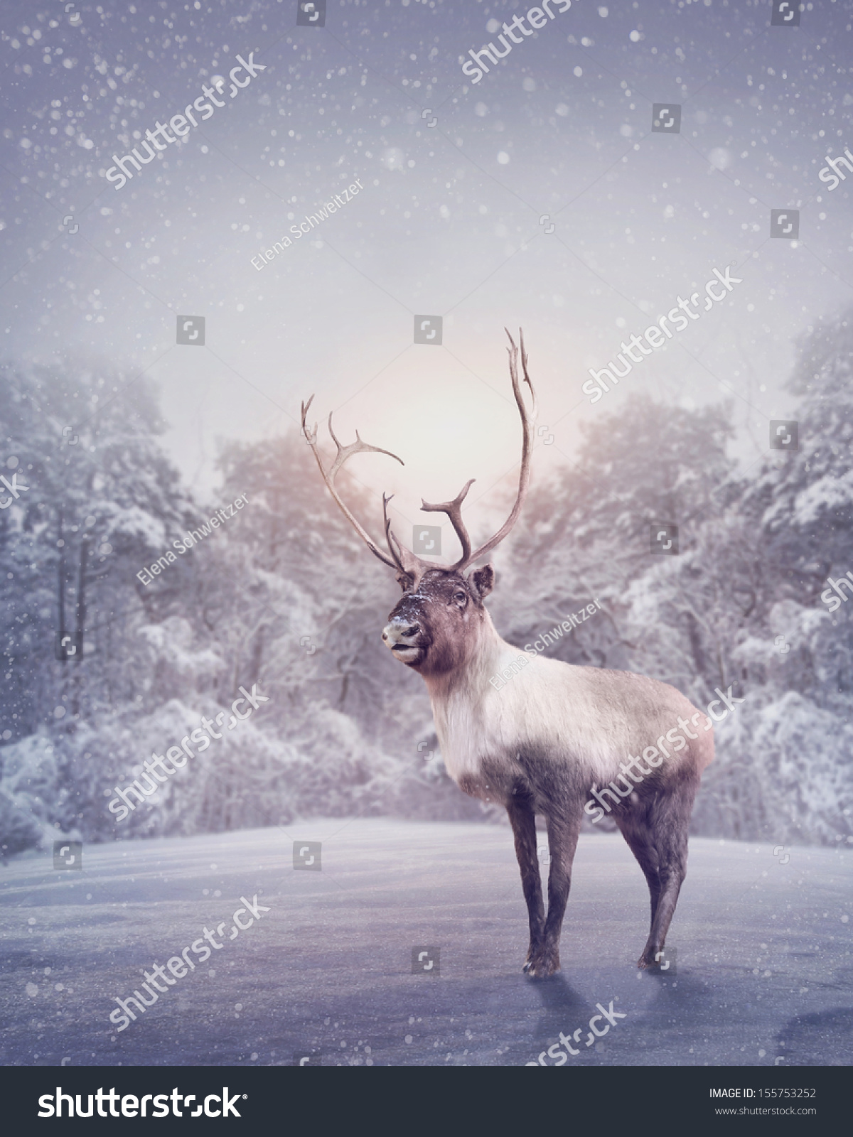 Christmas reindeer in snow reindeer standing in the snow stock photo