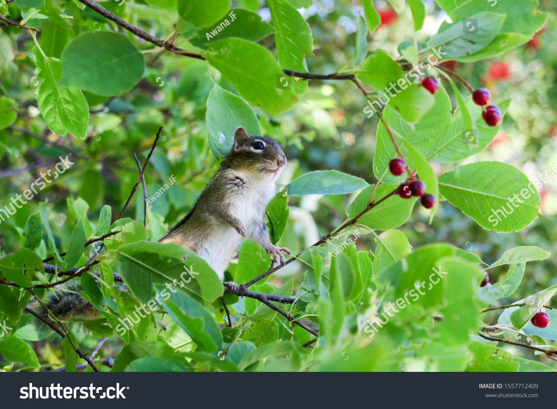 stock-photo-cute-chipmunk-on-tree-branch
