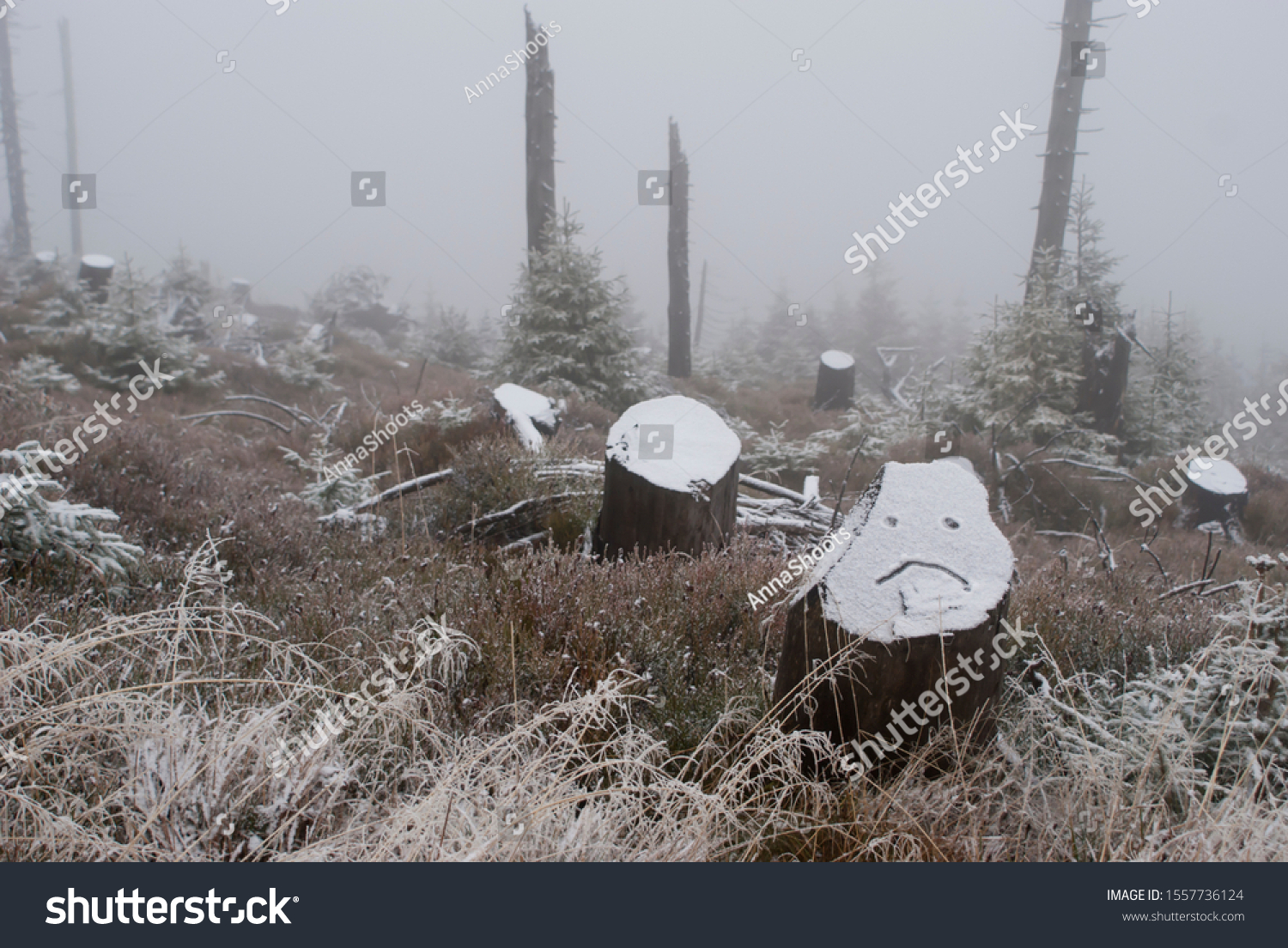 stock-photo-fog-in-the-winter-woods-snow