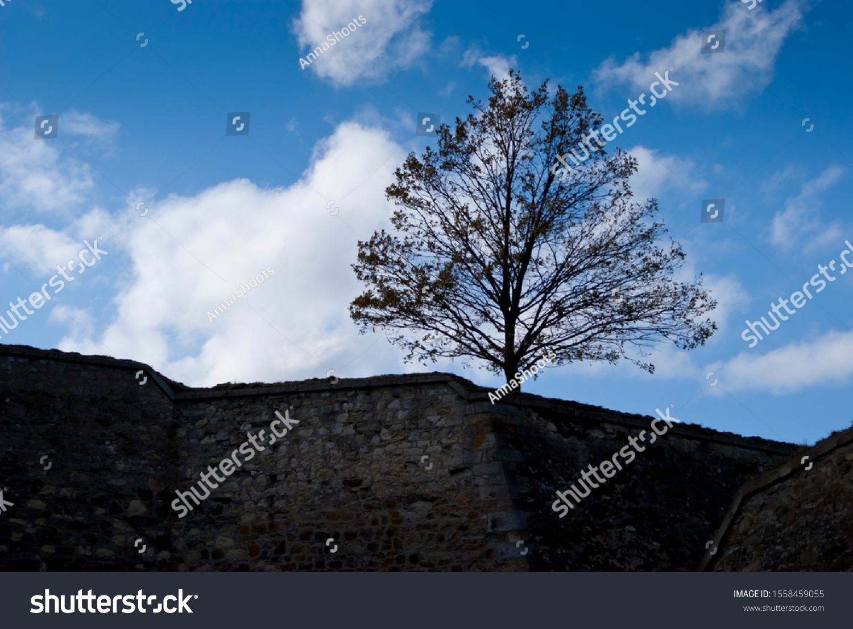 stock-photo-a-tree-growing-on-a-stone-wa