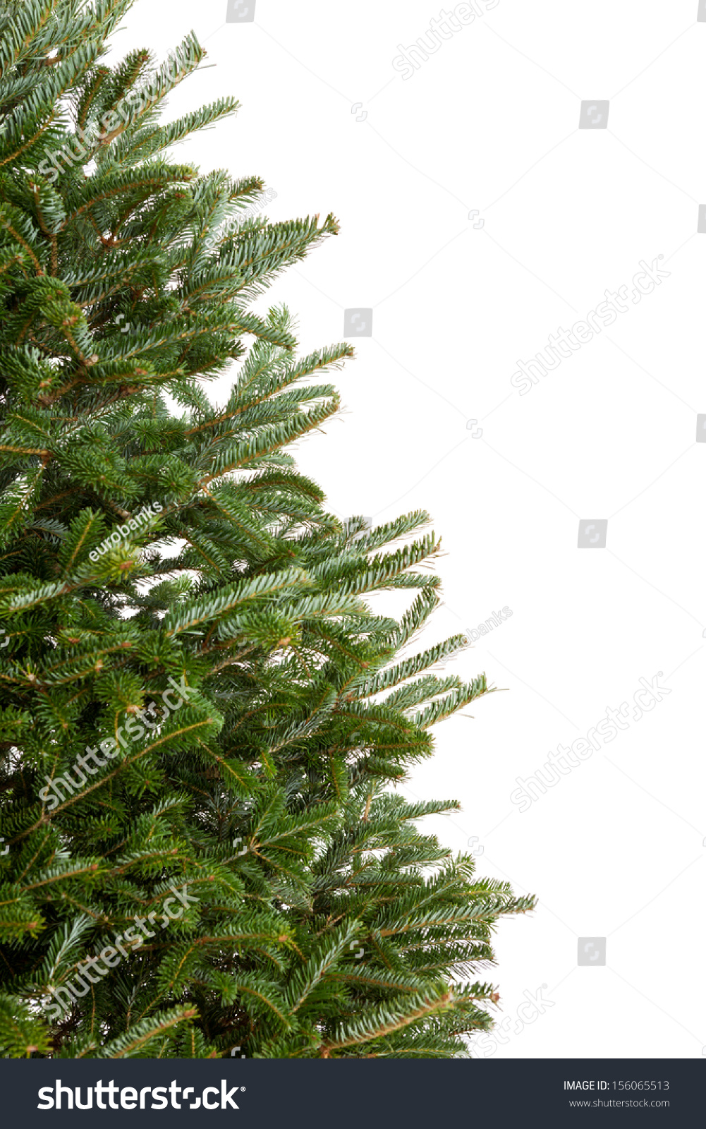 Closeup Of Part A Real Evergreen Christmas Tree With No Decorations Isolated On White Background