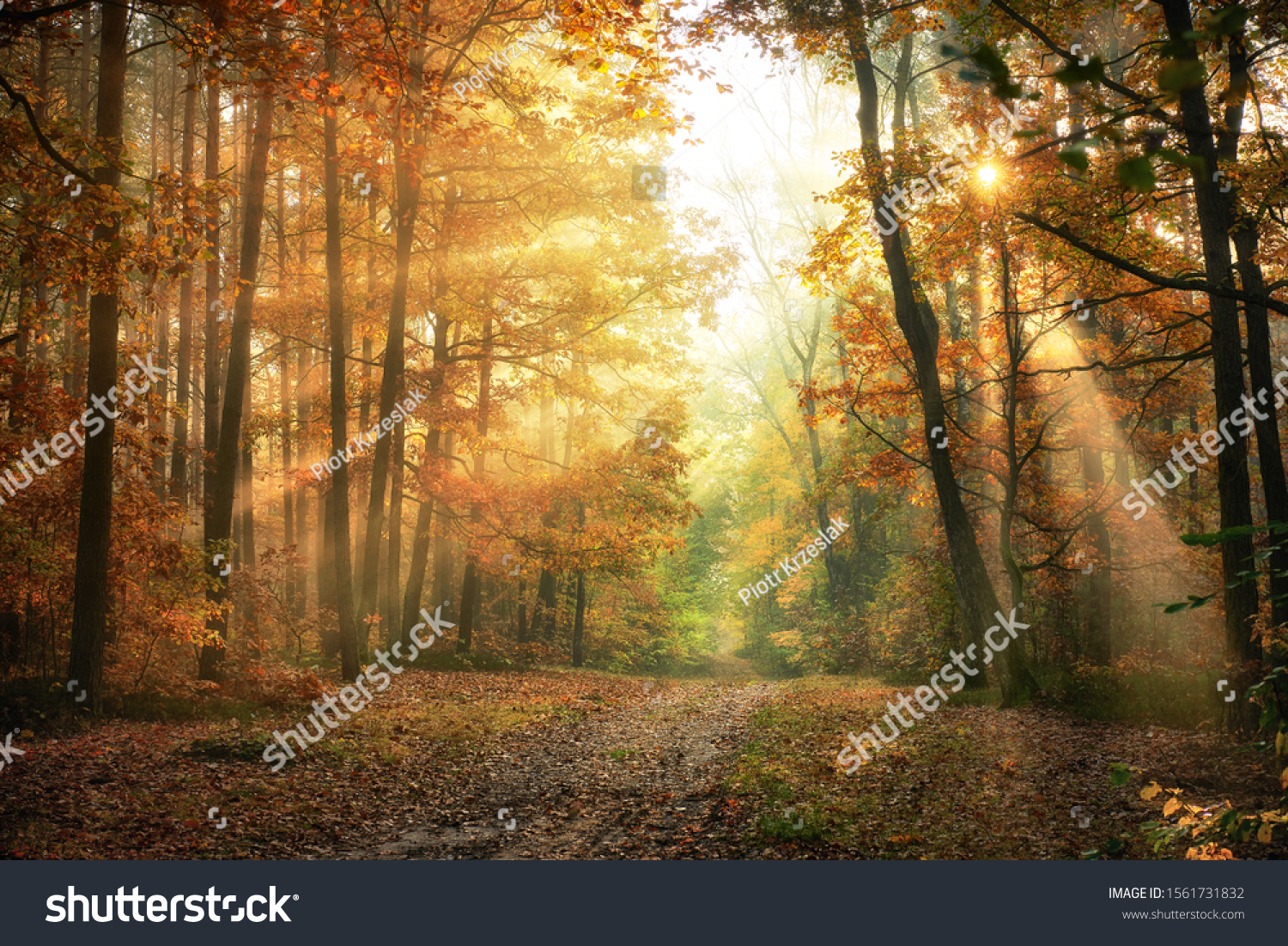 Autumn morning in the forest #1561731832