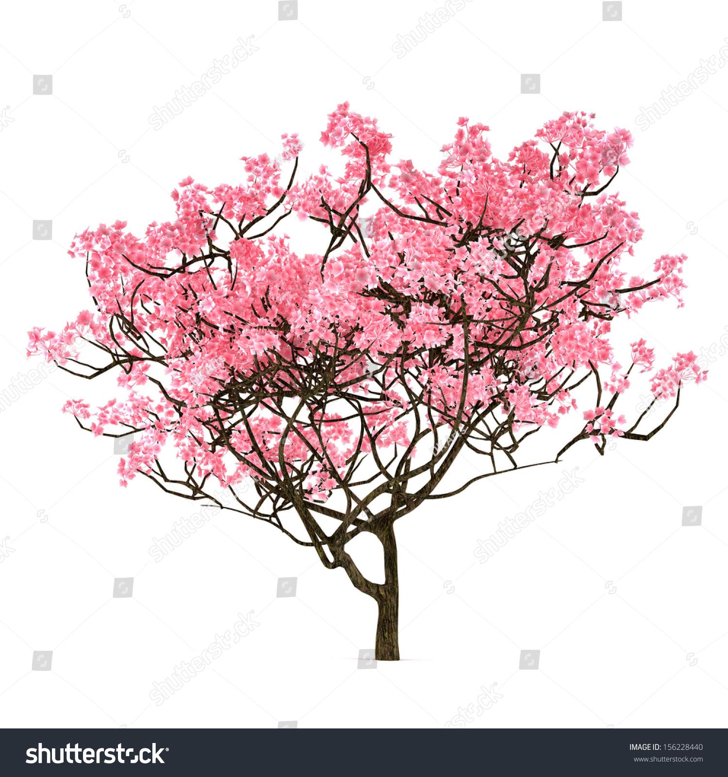 Sakura Tree Isolated Stock Illustration 156228440 ...